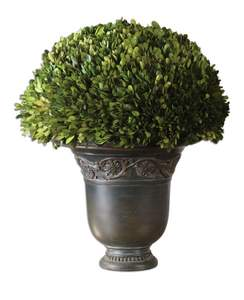 Preserved Boxwood,Globe Botanical Artificial Plant