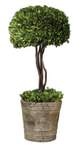 Preserved Boxwood Botanical Artificial Plant B